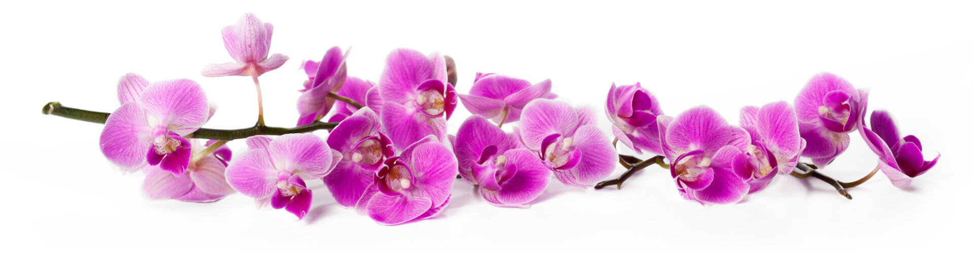 Acupuncture of Iowa Iowa City white orchid background